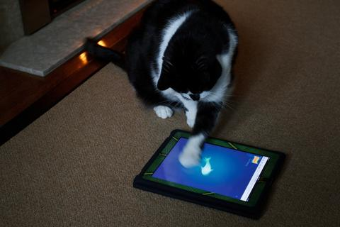 cat and tablet large